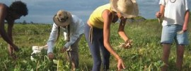 Share the Farm: Eat Organic and Support your Local Farmers