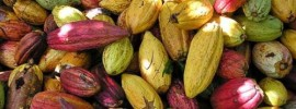 Unlocking the Sacred Power of Cacao