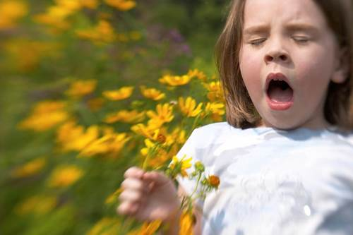 Little Girl Sneezing Due to Allergies by Flowers
