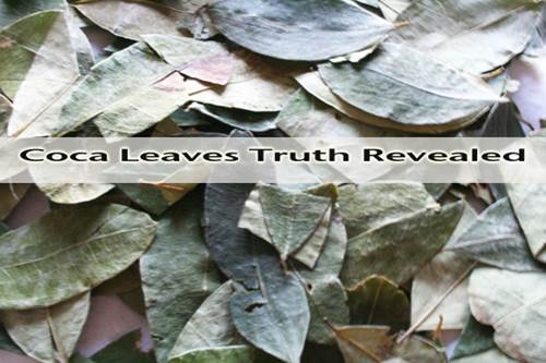 'Coca Leaves Truth Revealed' Banner