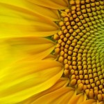 Enjoy The Health Benefits of Sunflower Seeds