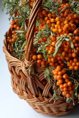 Sea Buckthorn Fruit Berries in a Basket