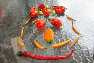Hot Pepper Face on a Glass Tabletop
