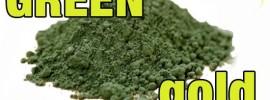 The Real Lowdown on Spirulina