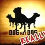Stop Letting Your Dog Eat Dog Meat!