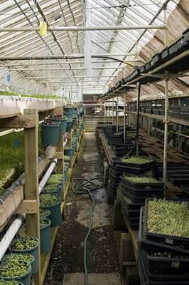 Greenhouse Grown Food