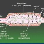 Got Parasites? What to do (part 2)