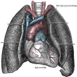 The Best Alternative Treatments for Mesothelioma