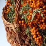 Fruit Health Benefits of Sea Buckthorn Oil